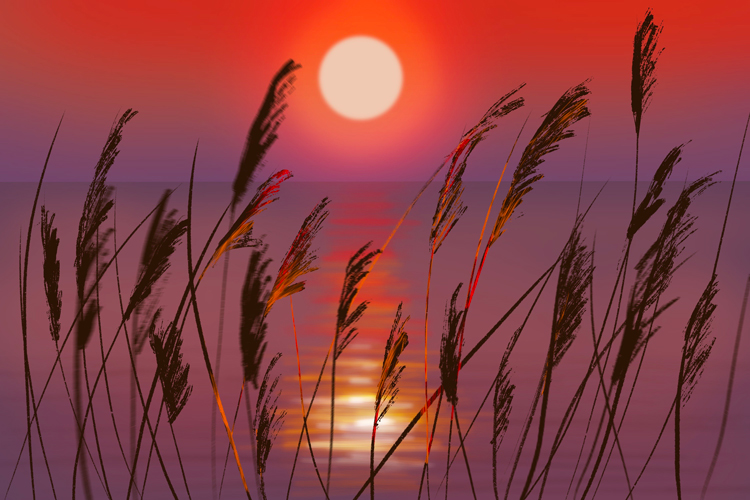 reeds in sunset via tutorial