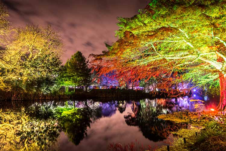 Syon Park 'The Enchanted Woodland', London