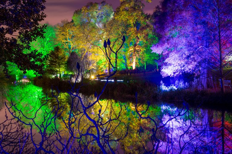 Syon Park at Night ('The Enchanted Woodland')
