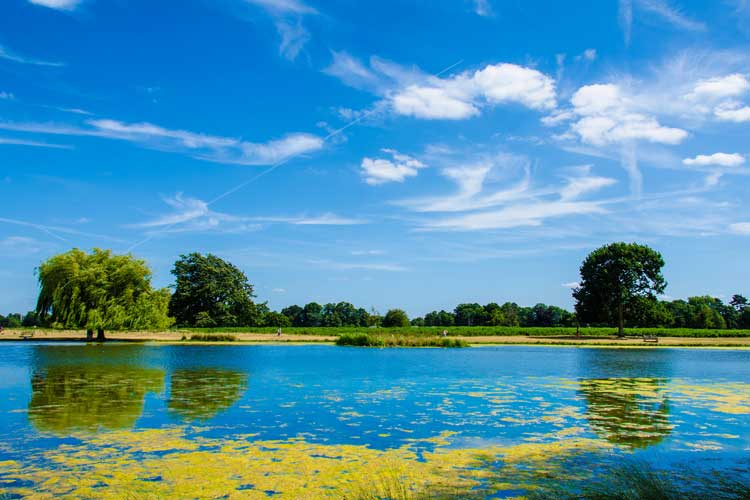 Summer landscape by a lake in the park